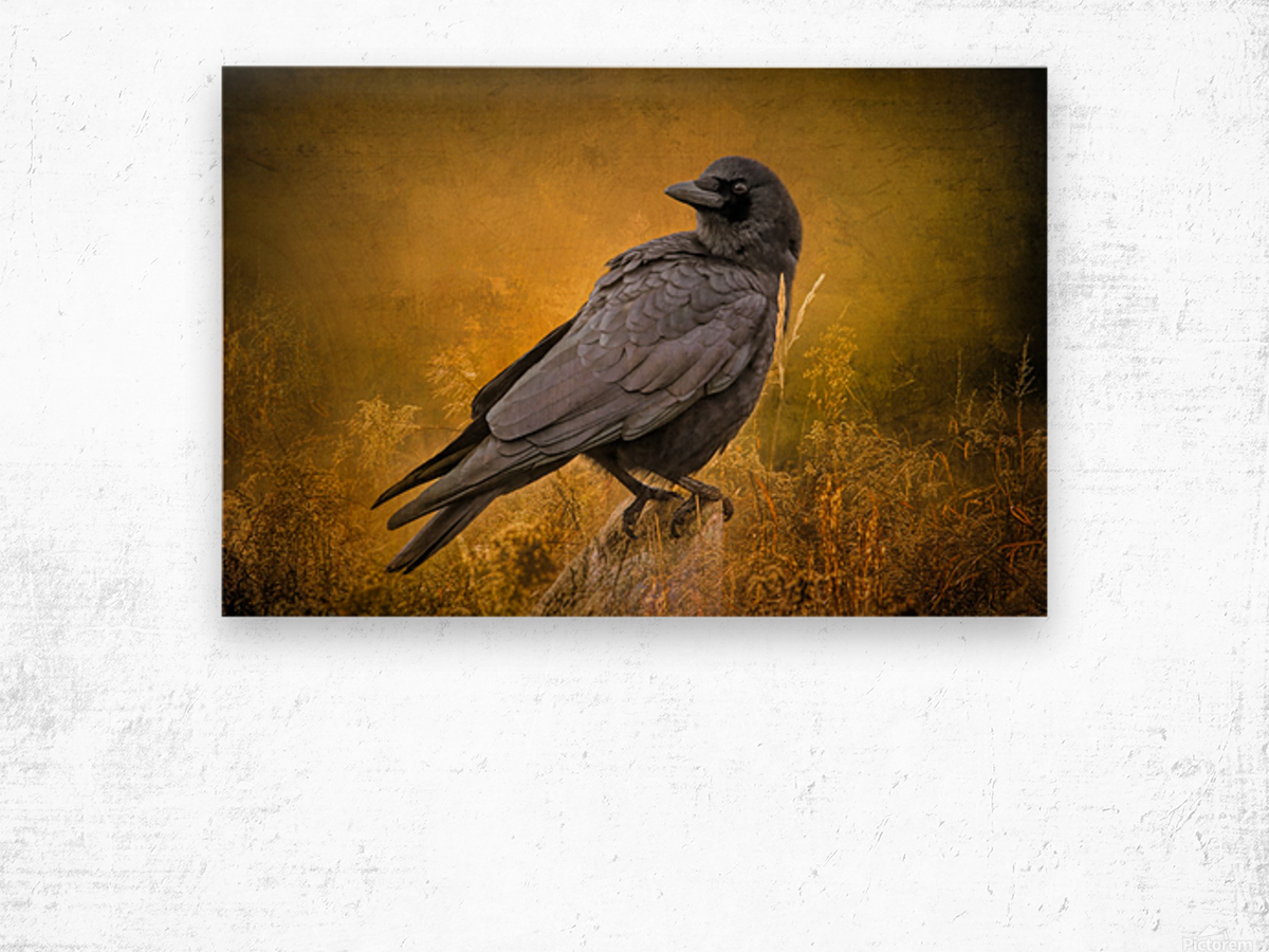 Black Crow Wood print