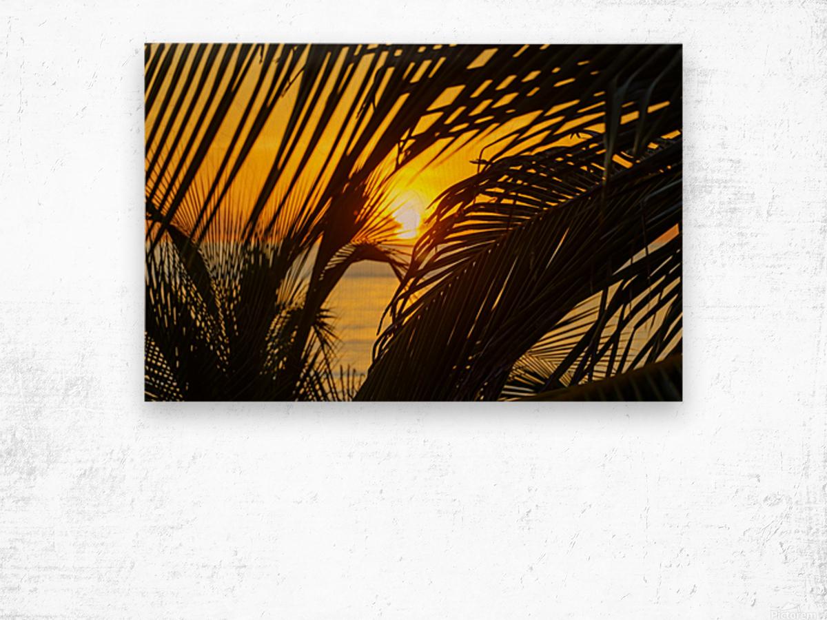 Sunrise through the palms Wood print