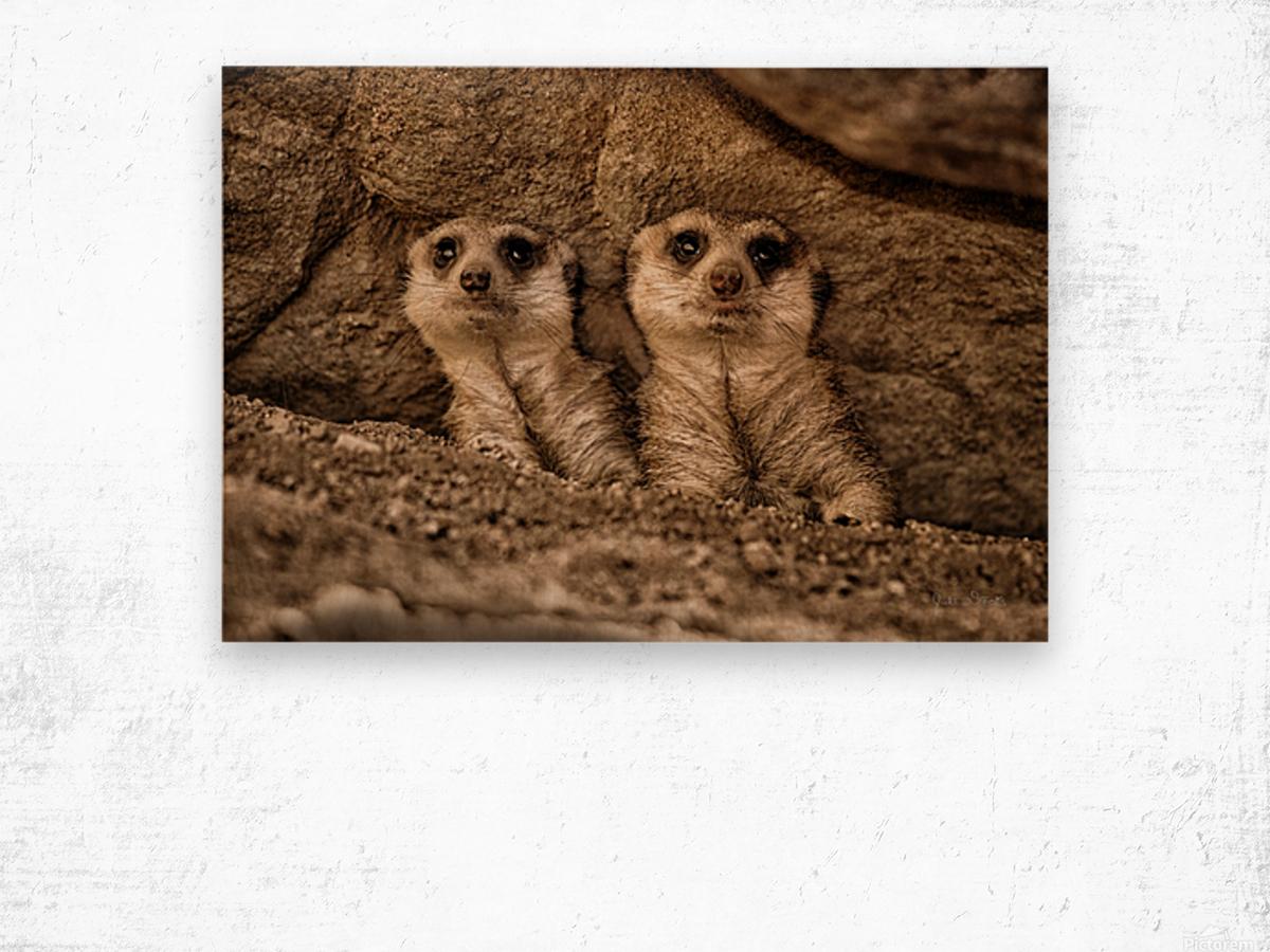 The Meerkat Twins Wood print