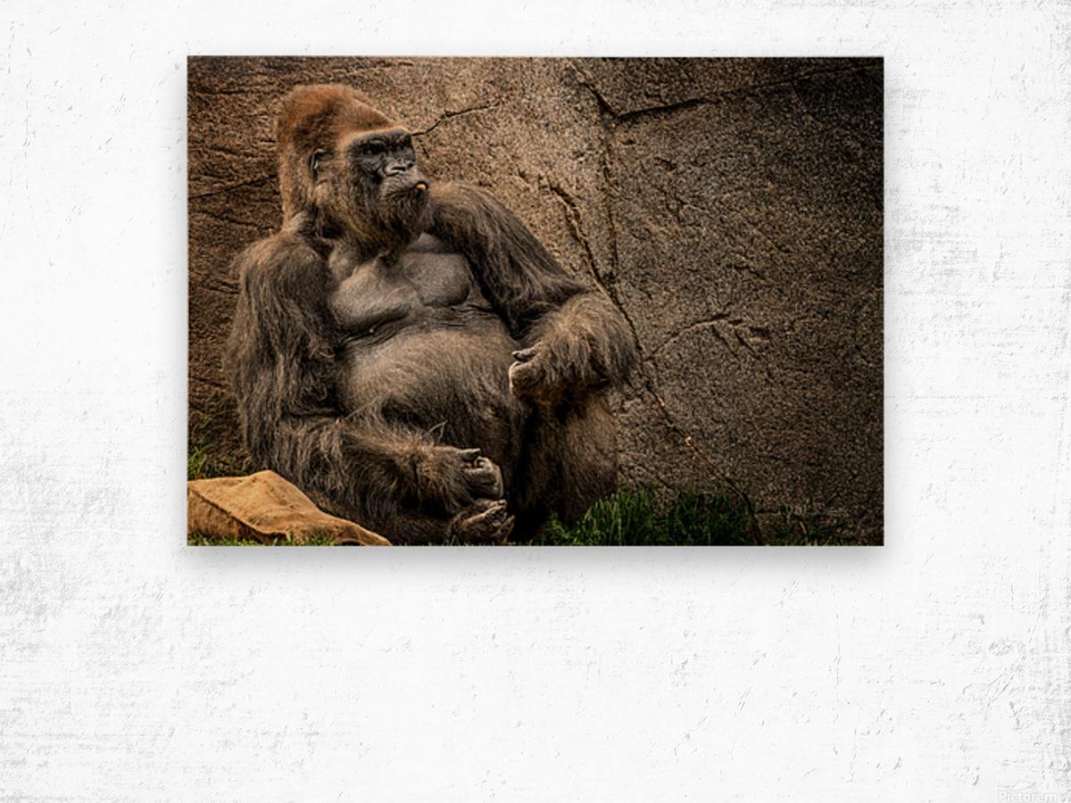 Big Daddy Silverback Gorilla Wood print