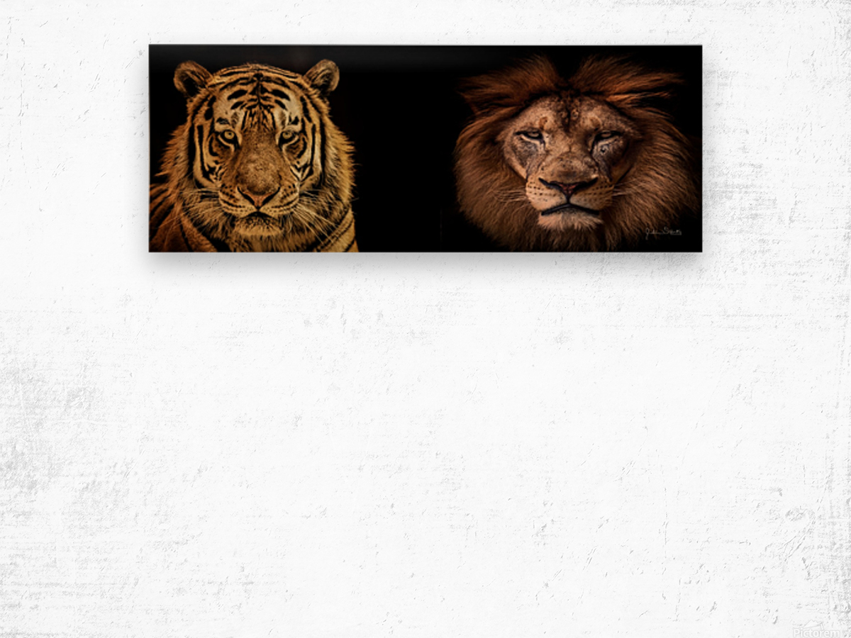 The Kings of Beasts - No Title Wood print