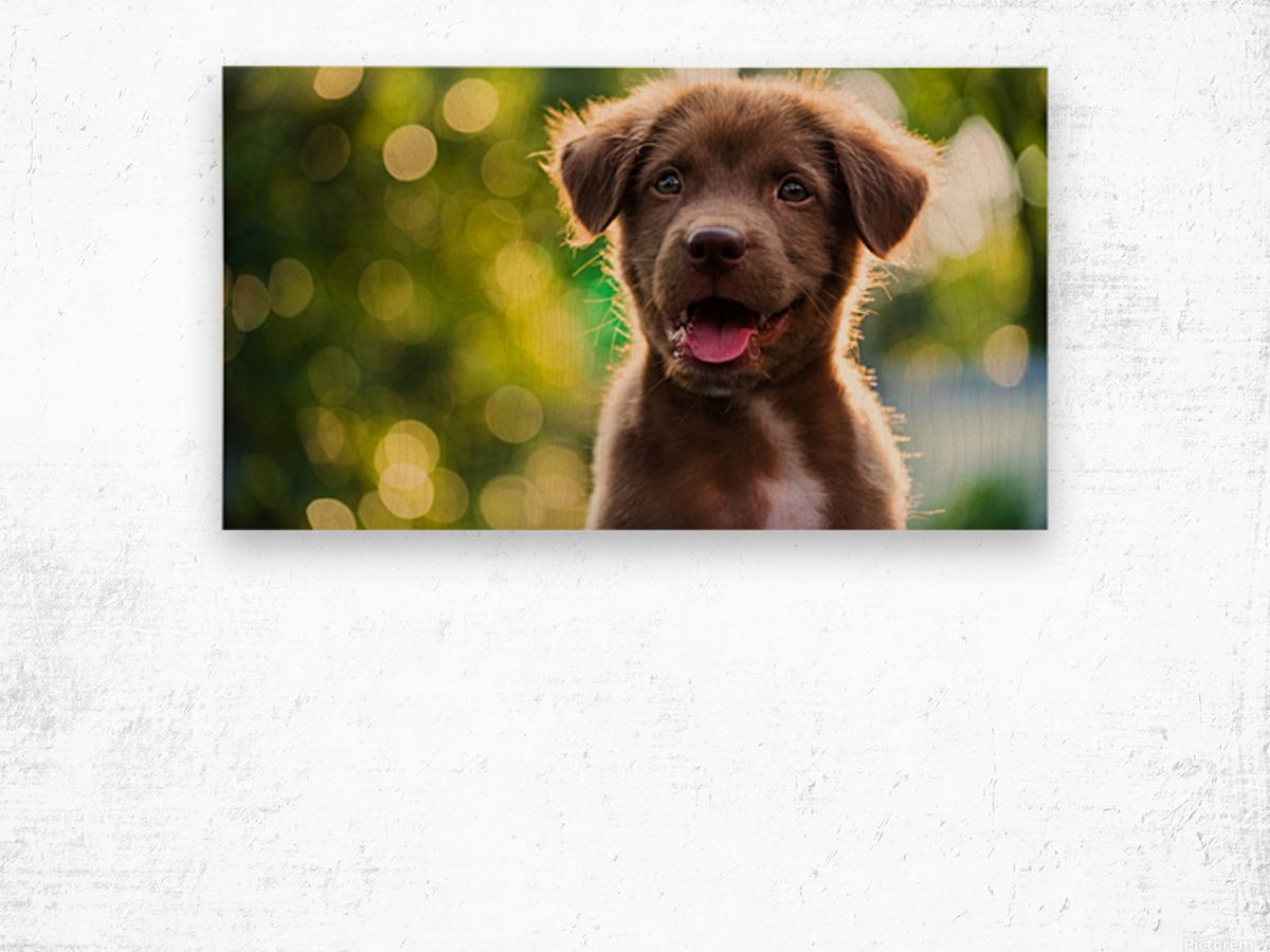 emotional support animal letter Wood print