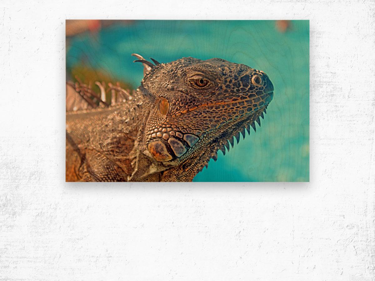 Spiny-Tailed Iguana Wood print