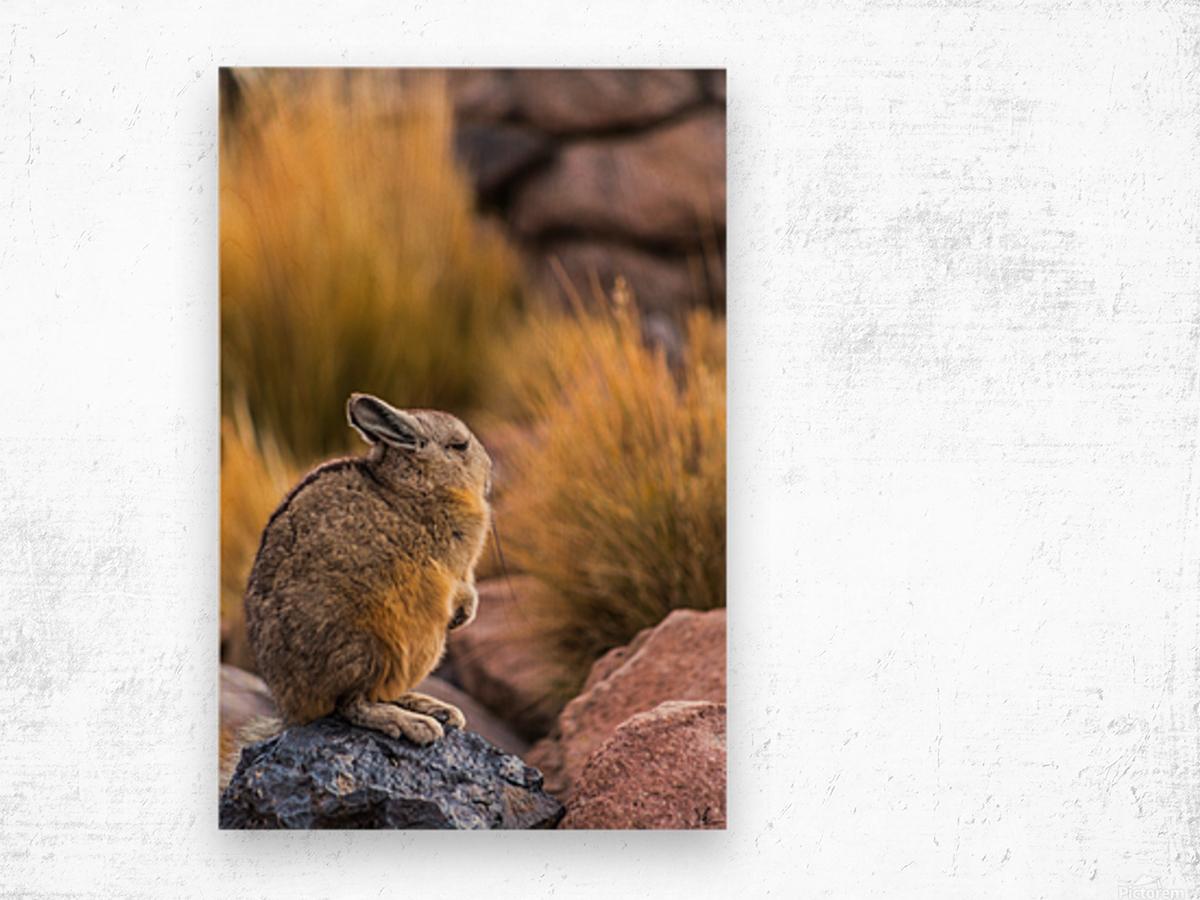 Viscacha Wood print