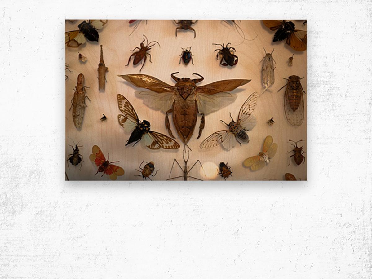 Biodiversity Wood print