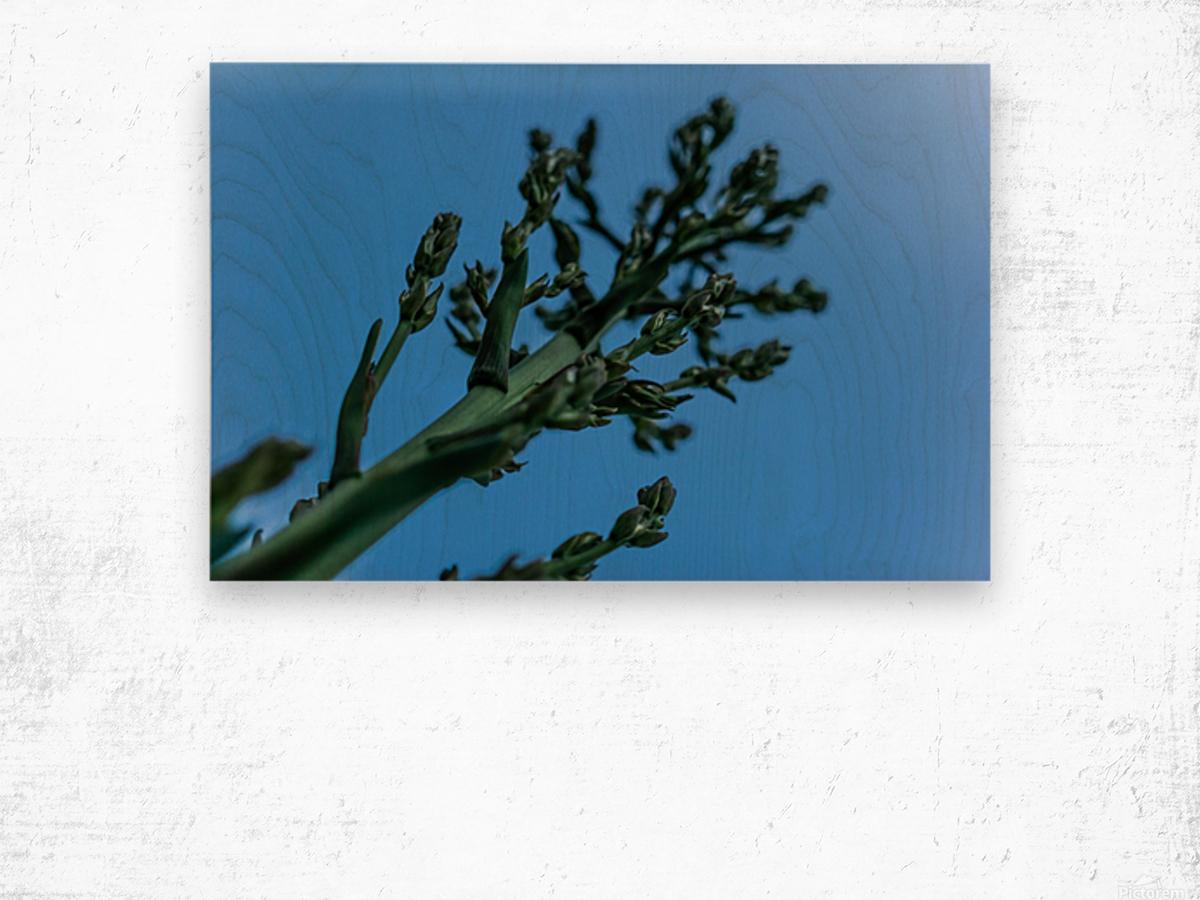Yucca Skies Wood print