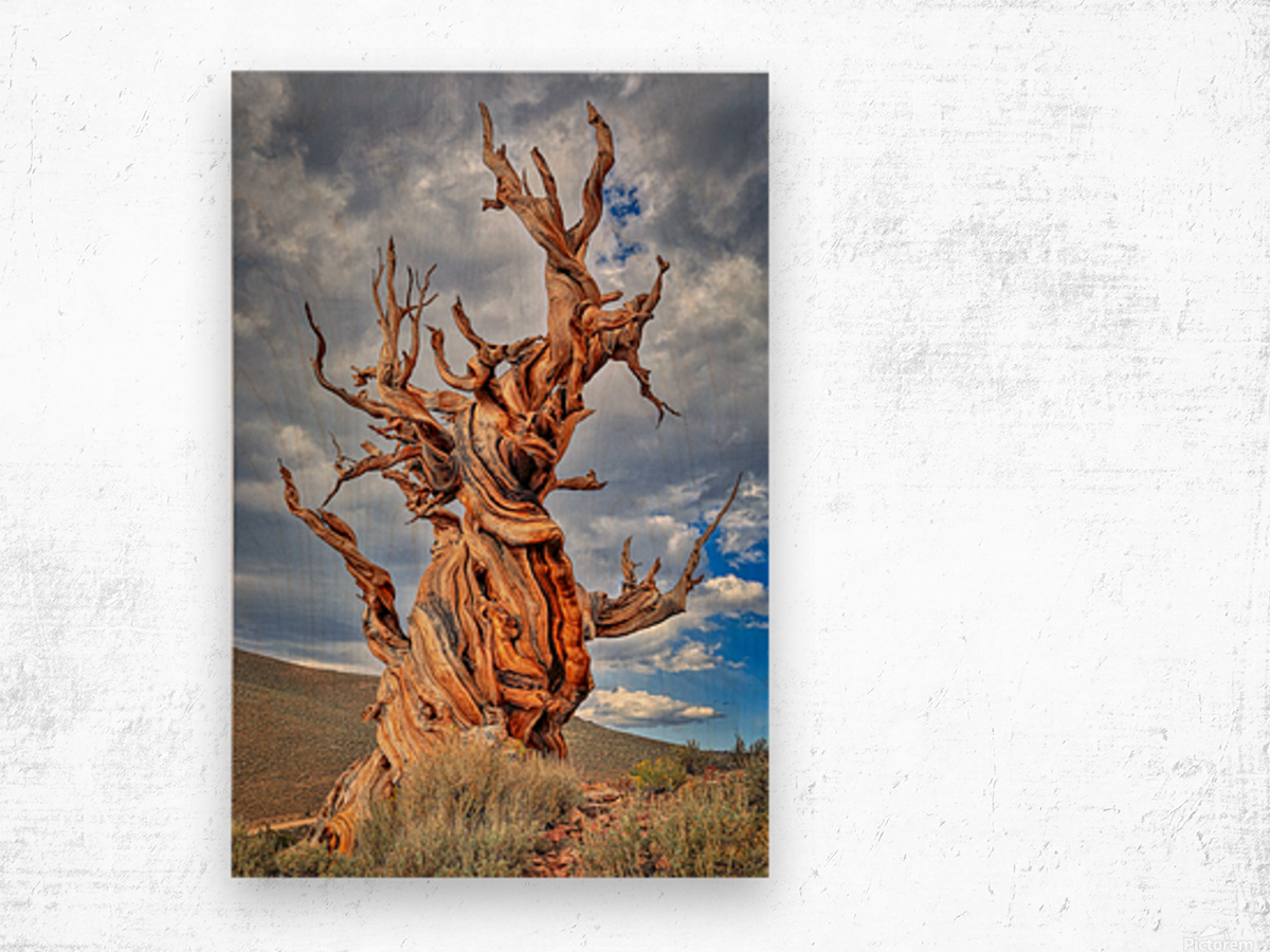 Great Witness of Time Wood print