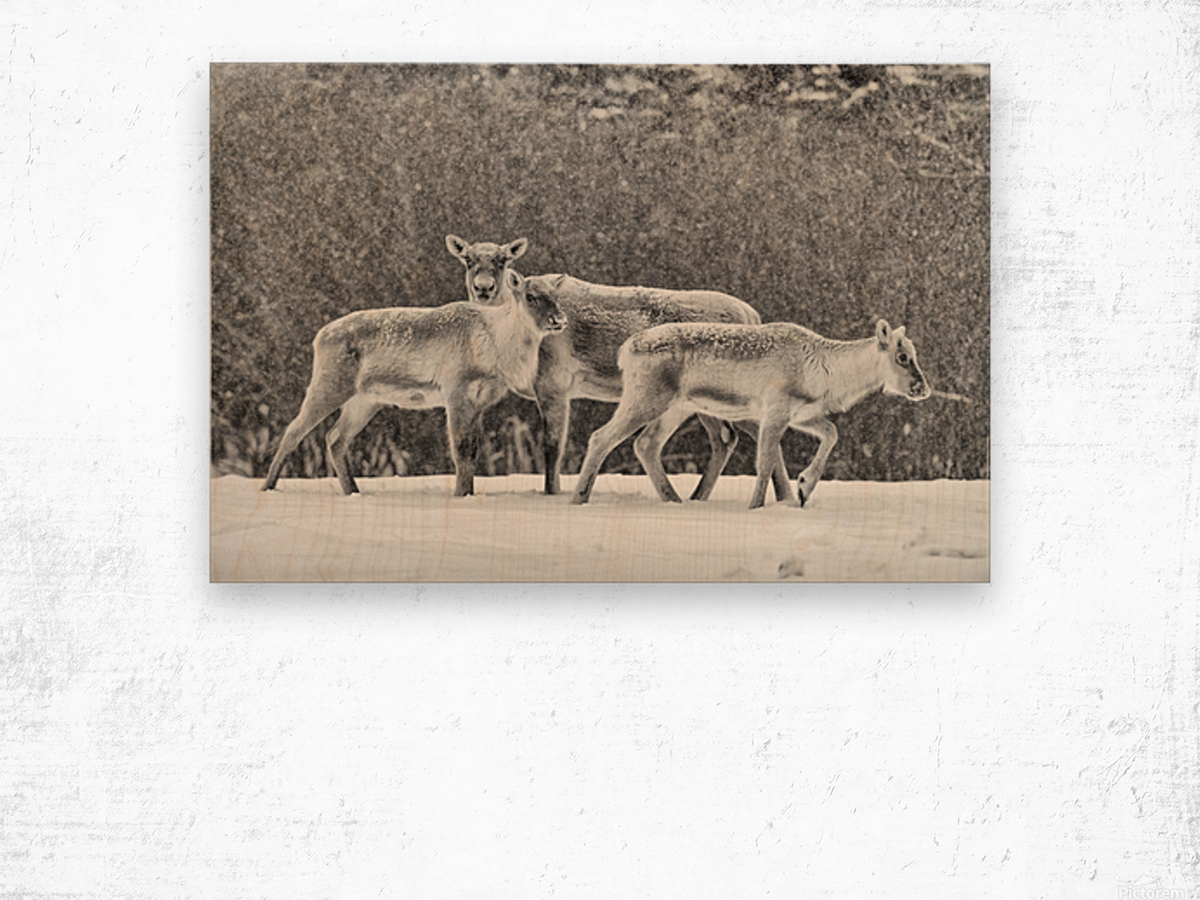 The Trio Wood print