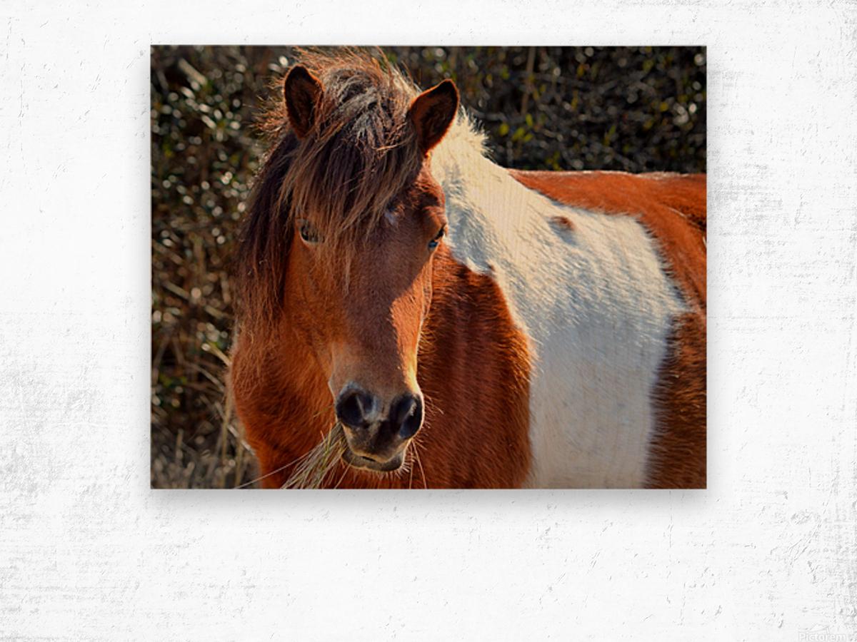 Assateague Pony Ms Macky Wood print