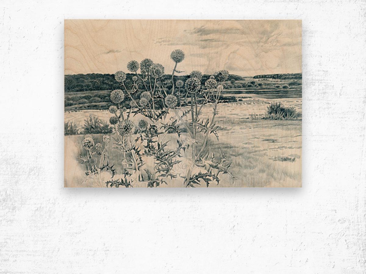 Scotch_Thistle Wood print