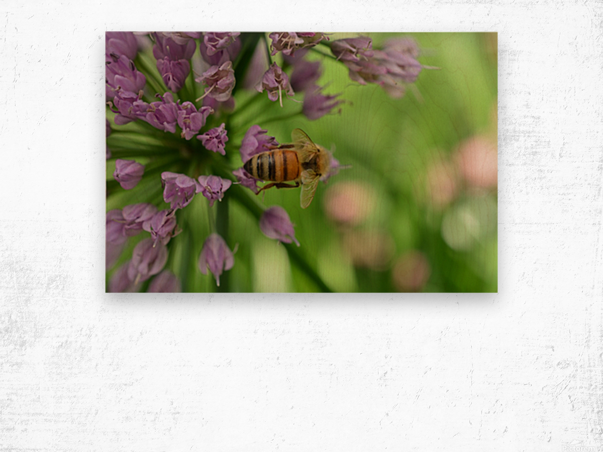 Bees & Flowers Photography Wood print