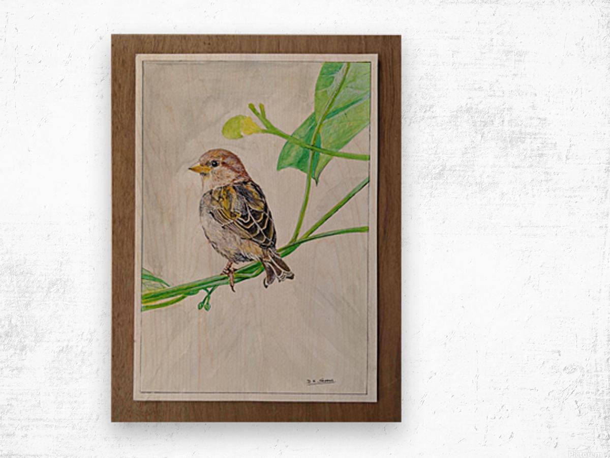 Sparrow_DKS Wood print