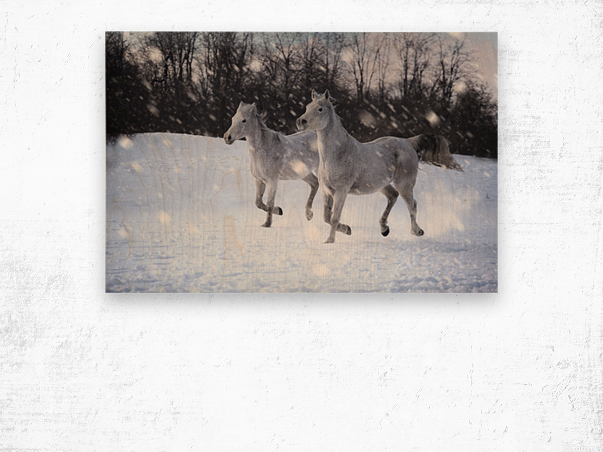 Horses in the Snow Wood print