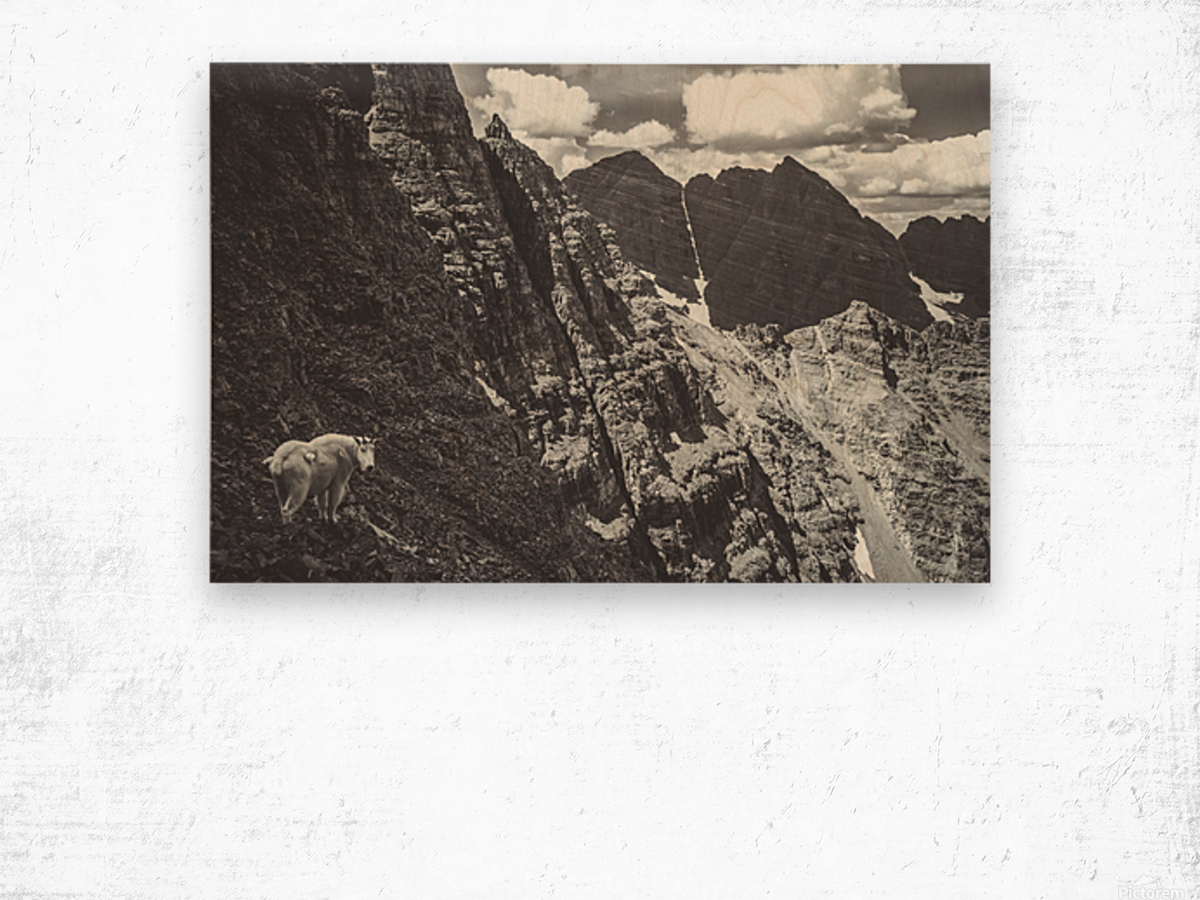 Pyramid Peak Mountain Goat Wood print