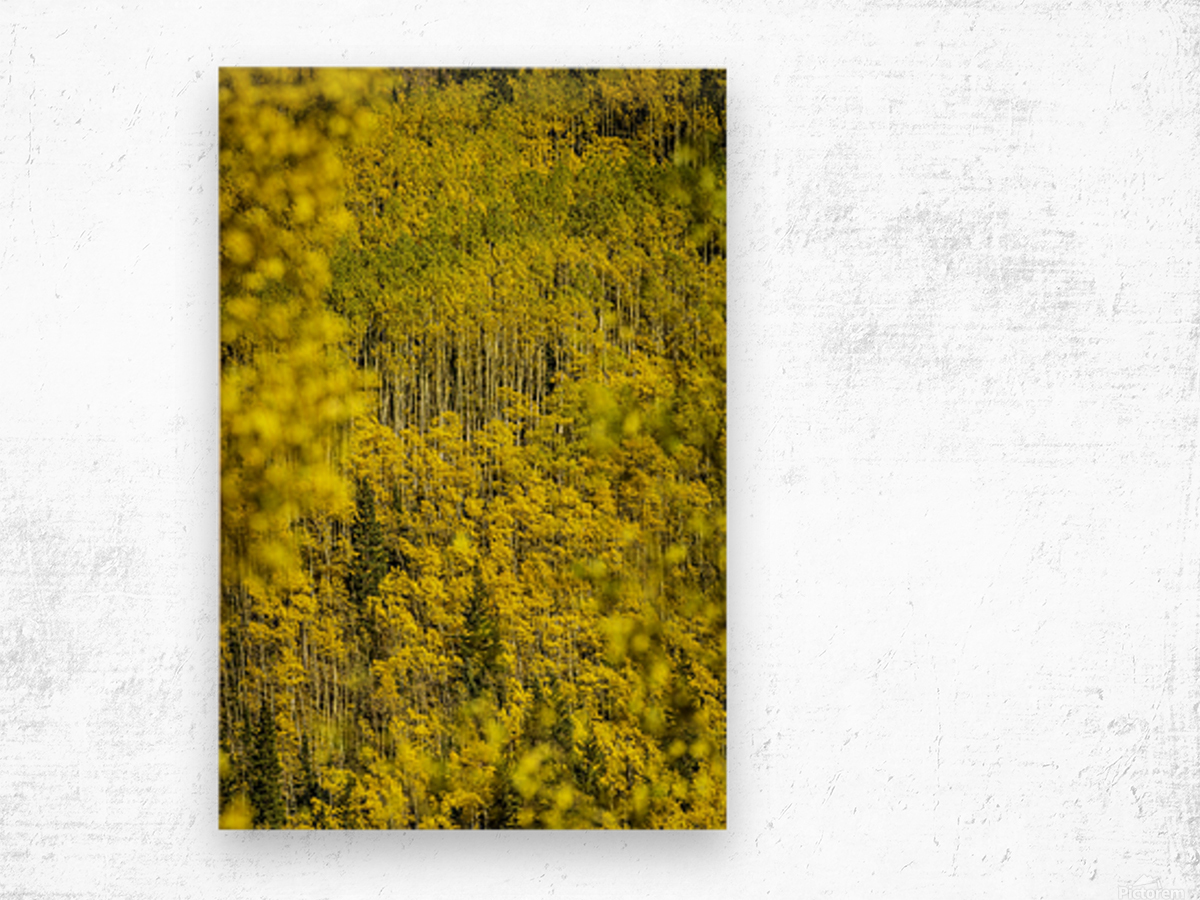 Full Stack of Yellows Wood print