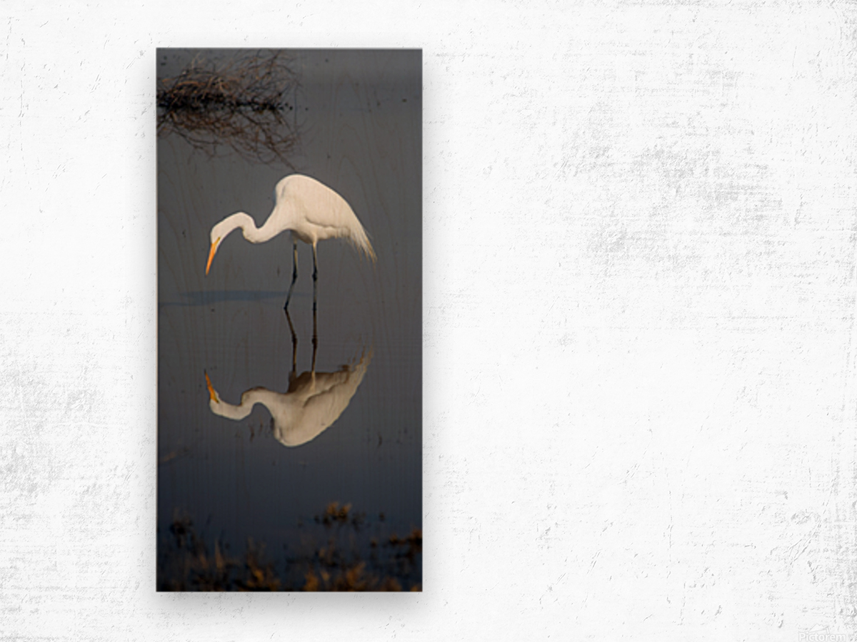 Who Are You White Egret Wood print