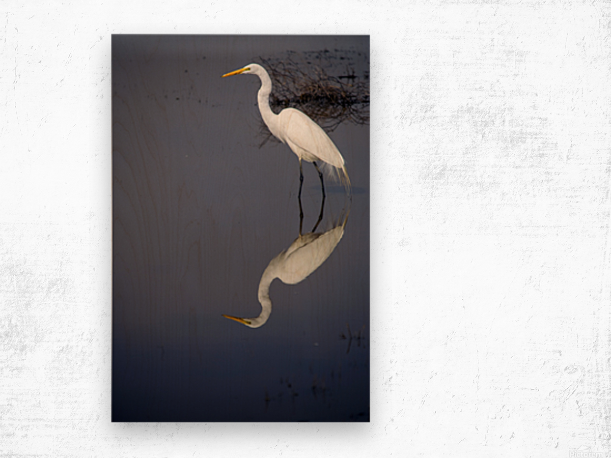 White Egret Reflection Wood print
