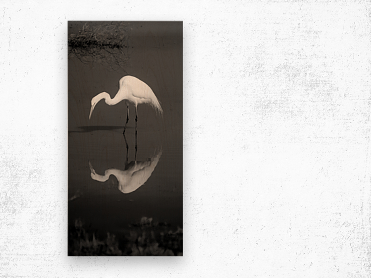 Who Are You White Egret BW Wood print