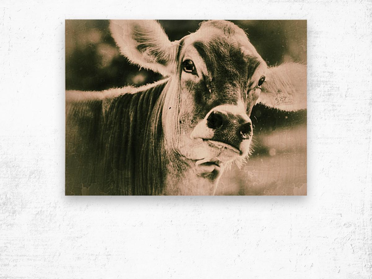 Gitane Wood print