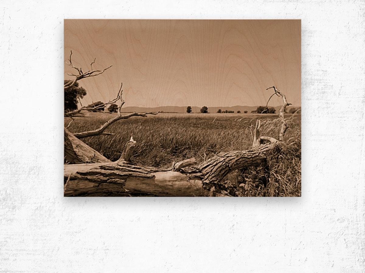 Isle aux Grues Wood print