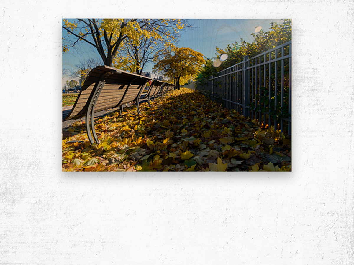 Autumn leaves in the park Wood print