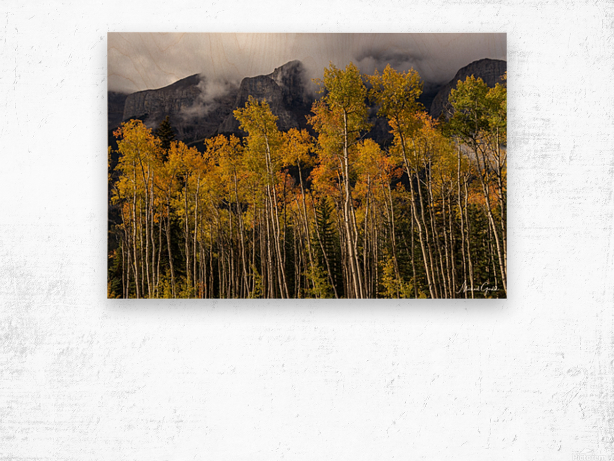 Aspens In Fall Banff National Park Wood print