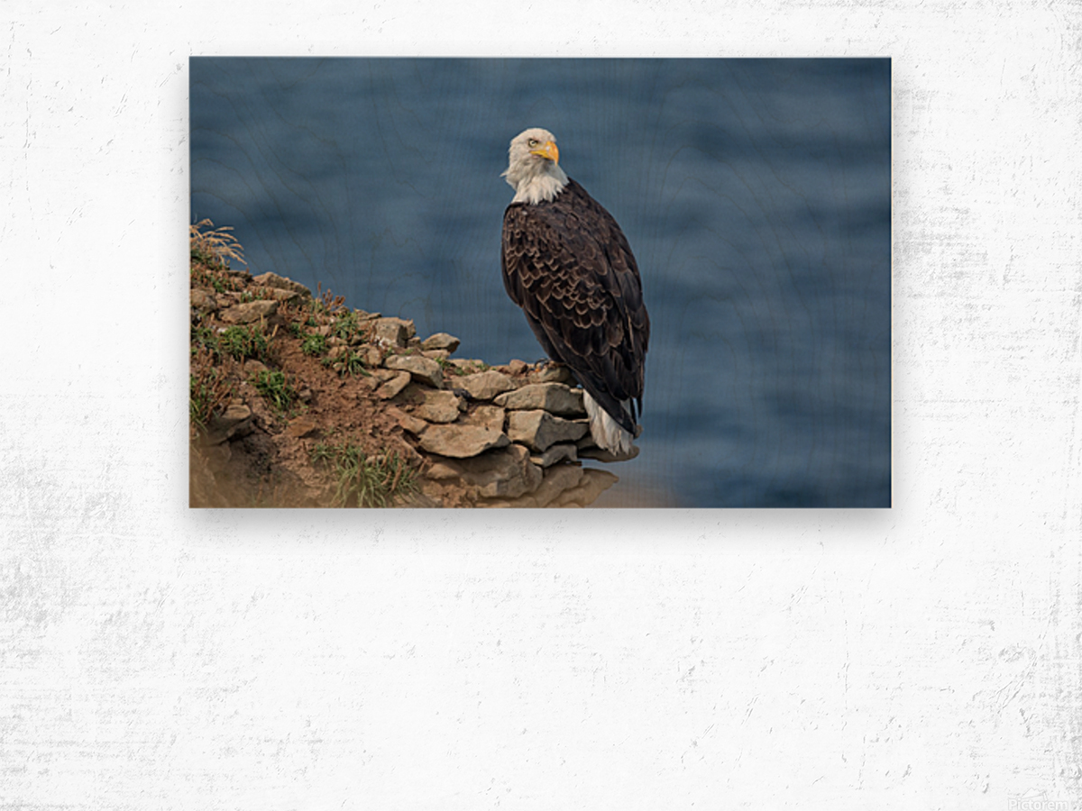 Perched and Proud Wood print