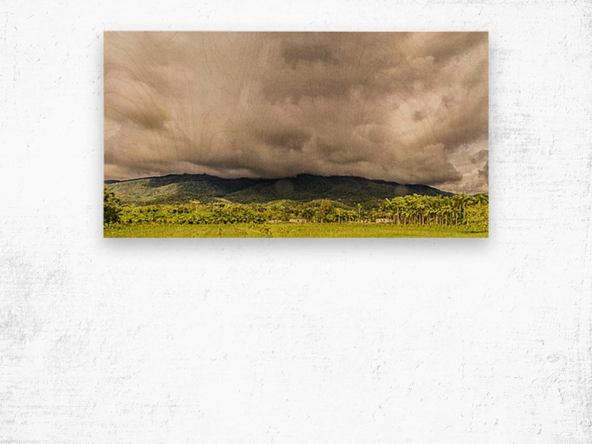 Nature IV Wood print