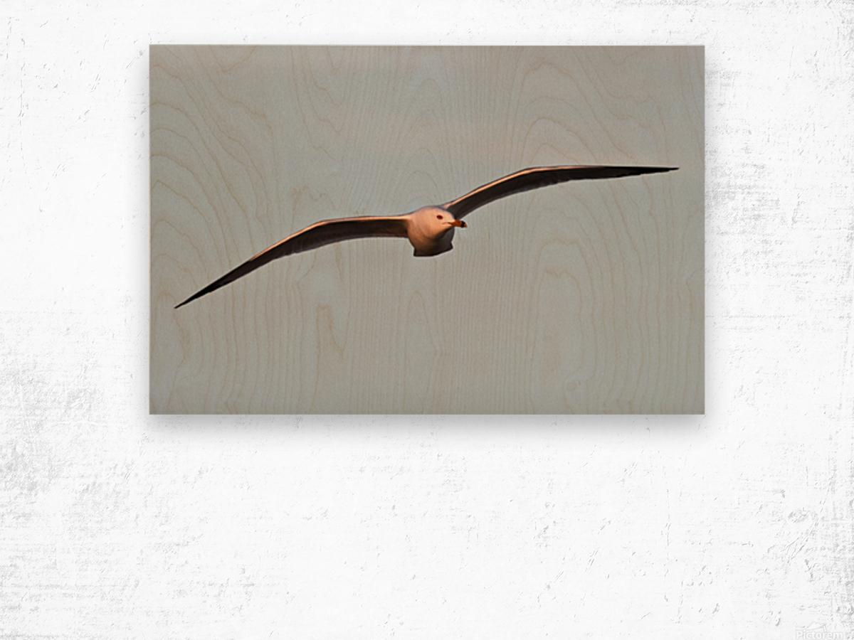Fly like a Seagull Wood print