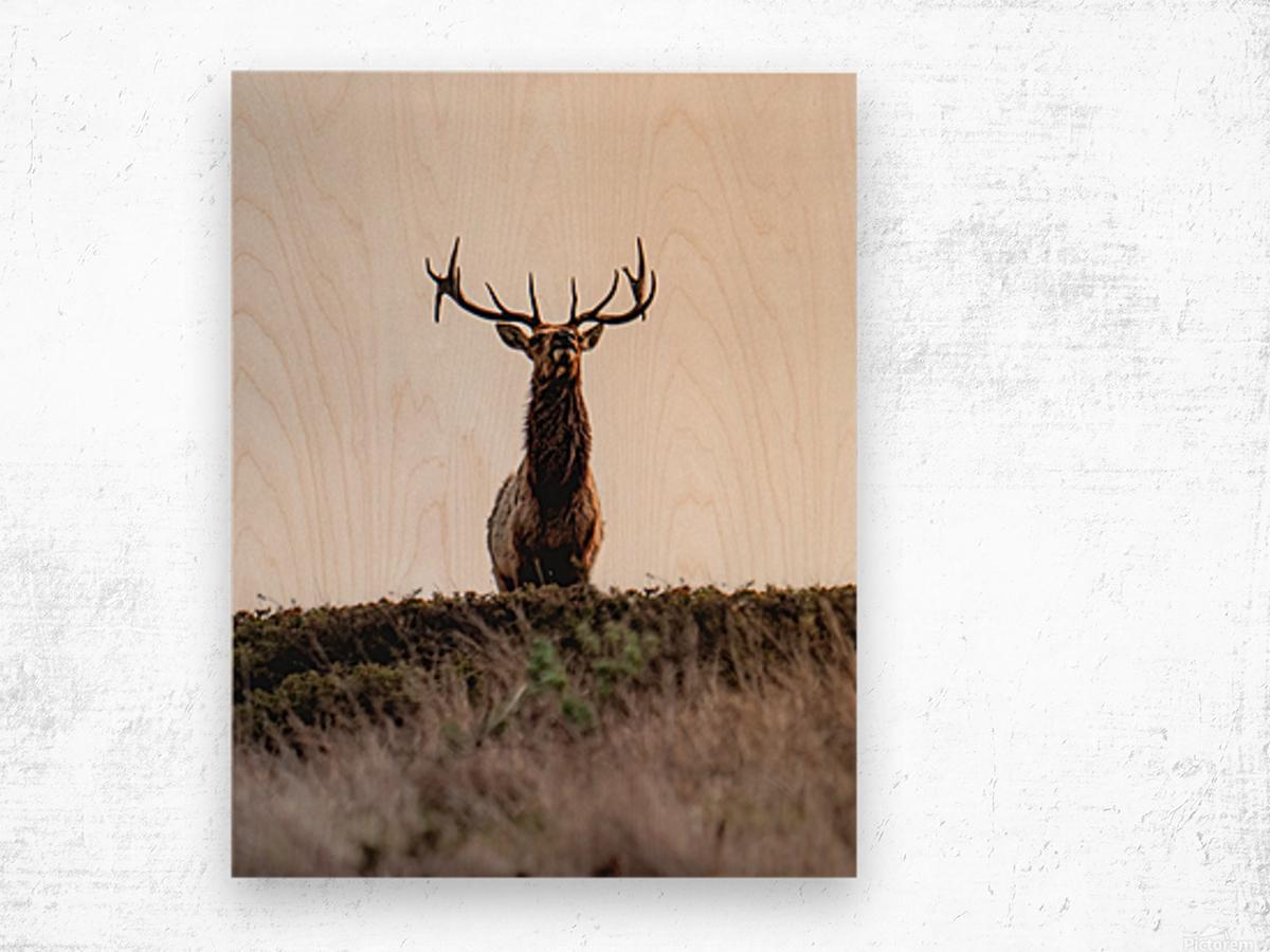 Tule Elk On Top Of A Hill Wood print