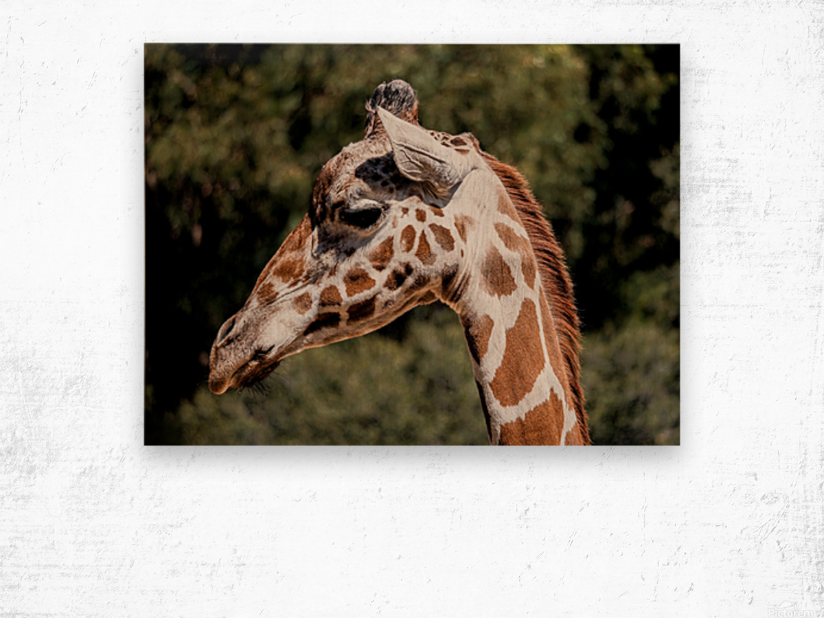 Profile of a Giraffe Wood print