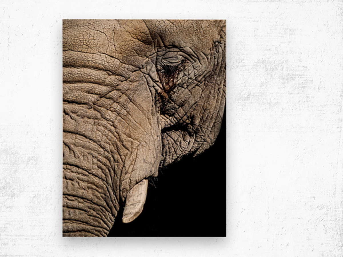 Elephant Close Up Wood print
