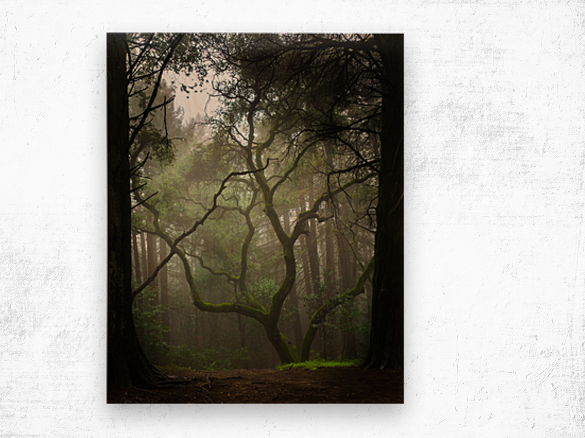 Clearing in the Woods Wood print