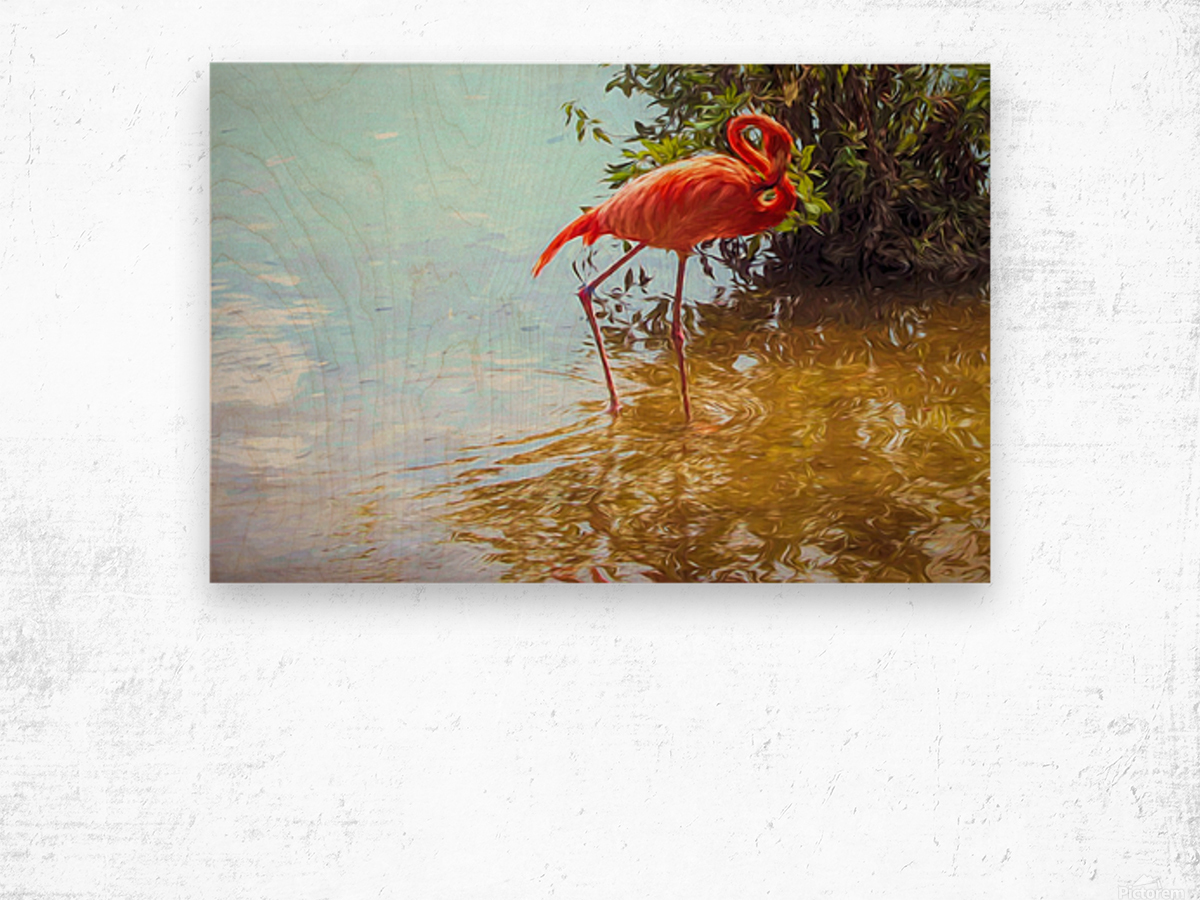 Pink Flamingo Wading In Water Wood print