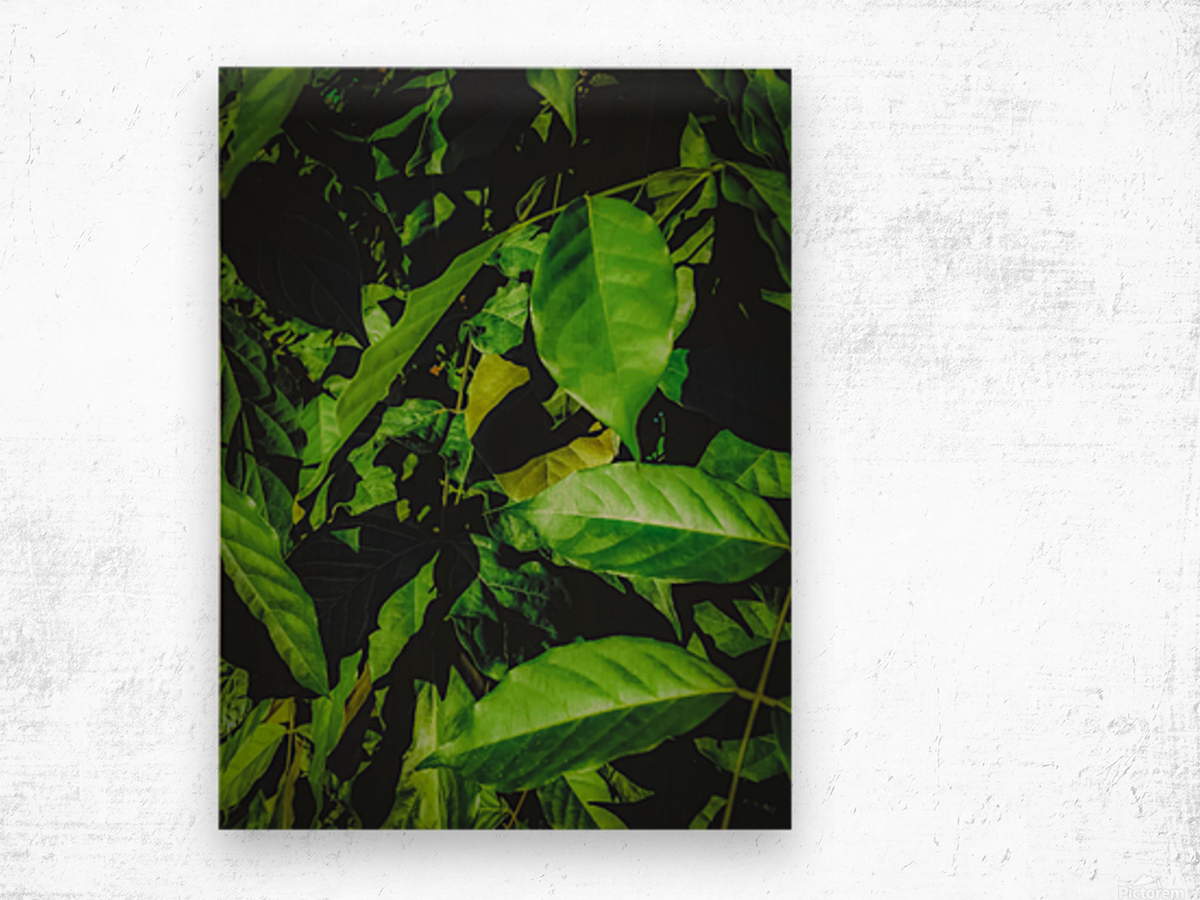 green leaves texture background Wood print