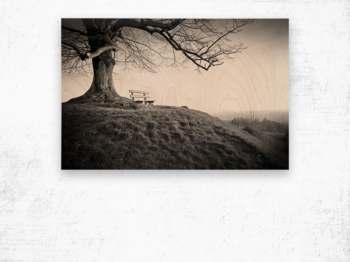 lonely bench under a tree Wood print