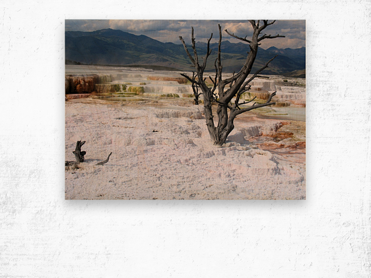 Mammoth Hot Springs Yellowstone National Park Wood print