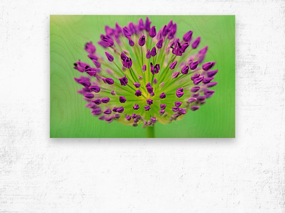 Neon Allium Wood print