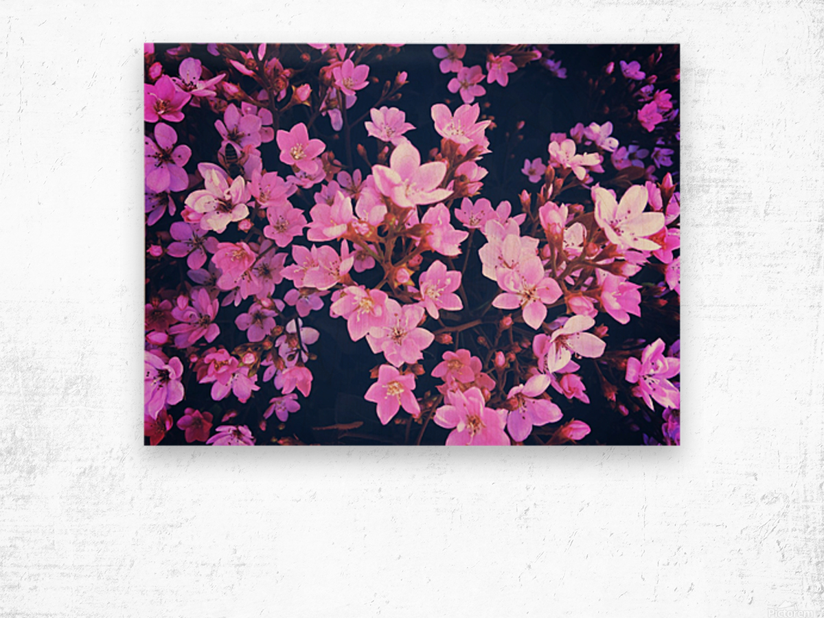 blooming pink flowers garden texture background Wood print