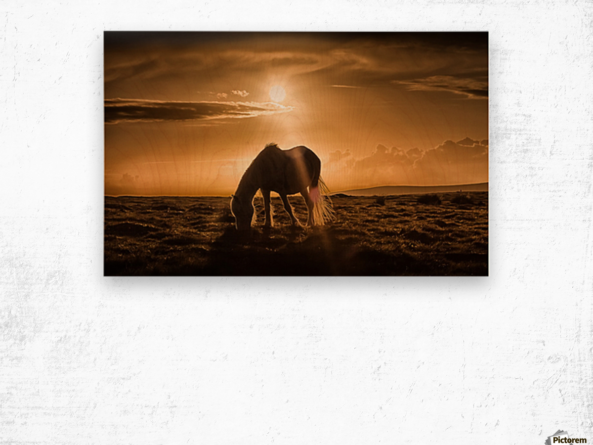 Gower pony at sunset on Cefn Bryn Gower Wood print