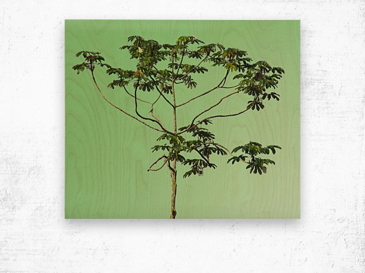 Nature - XIII Wood print