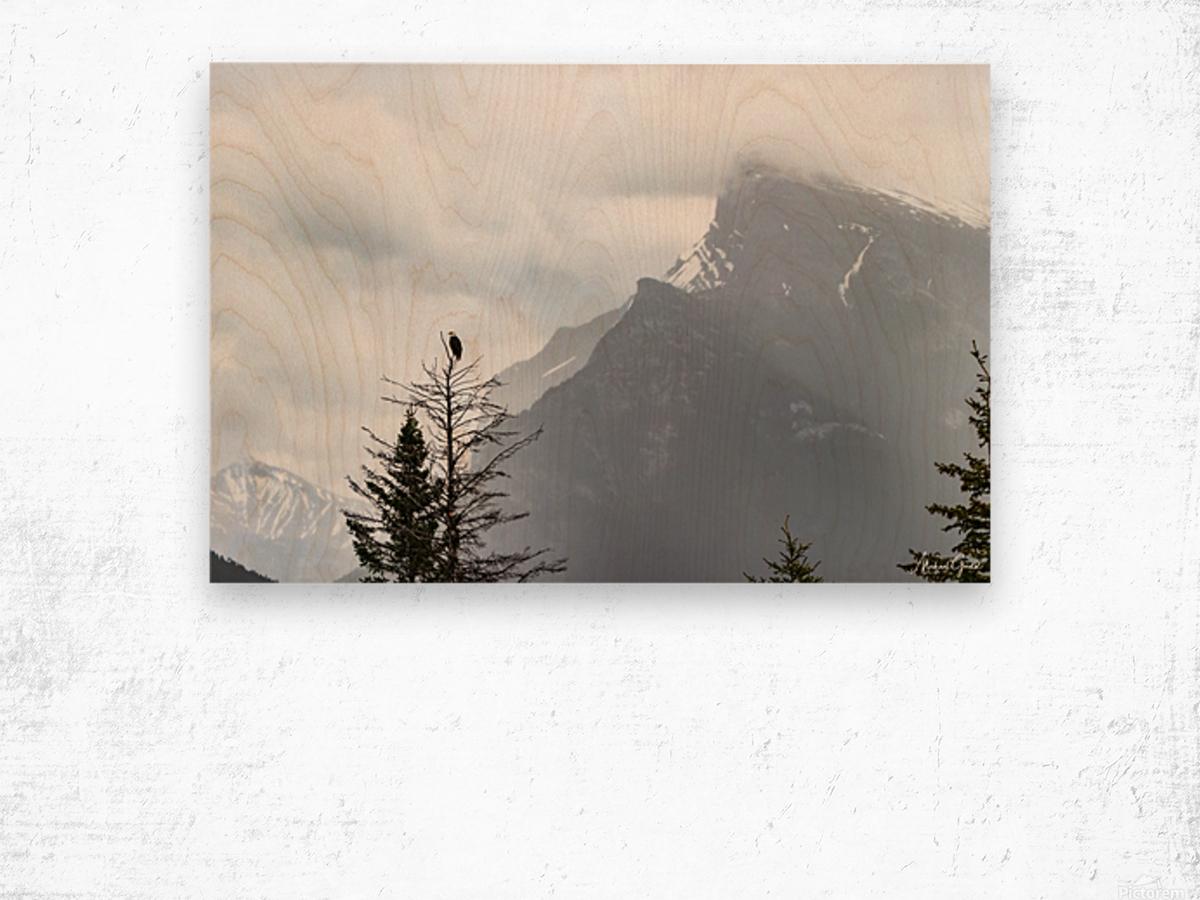 Bald Eagle In Banff National Park Wood print