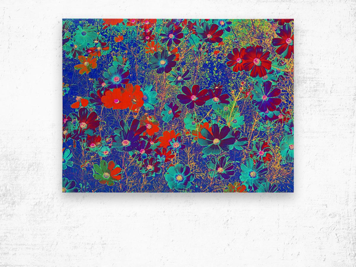 Cosmos Flowers Blue Red Wood print