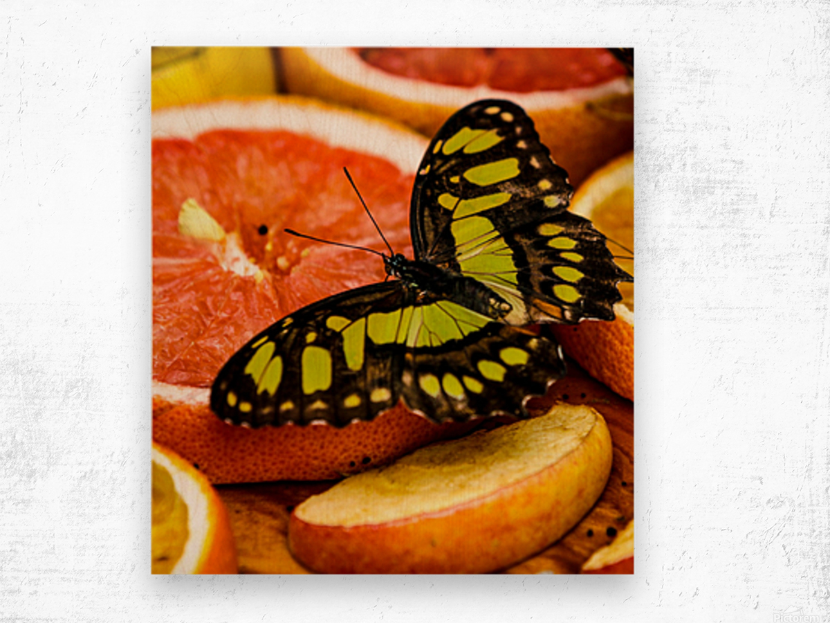Butterfly And Oranges Wood print