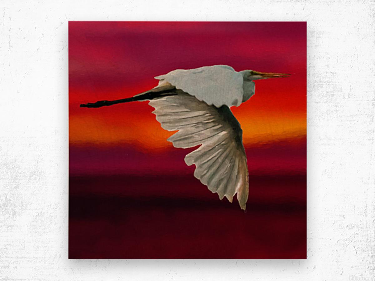 Egret in sunset Wood print