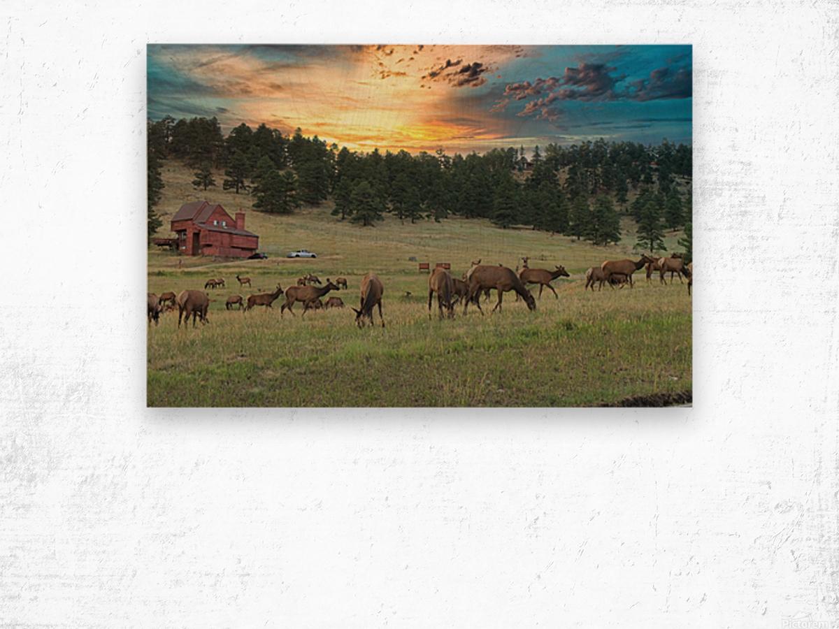 Colorado Elk Wood print