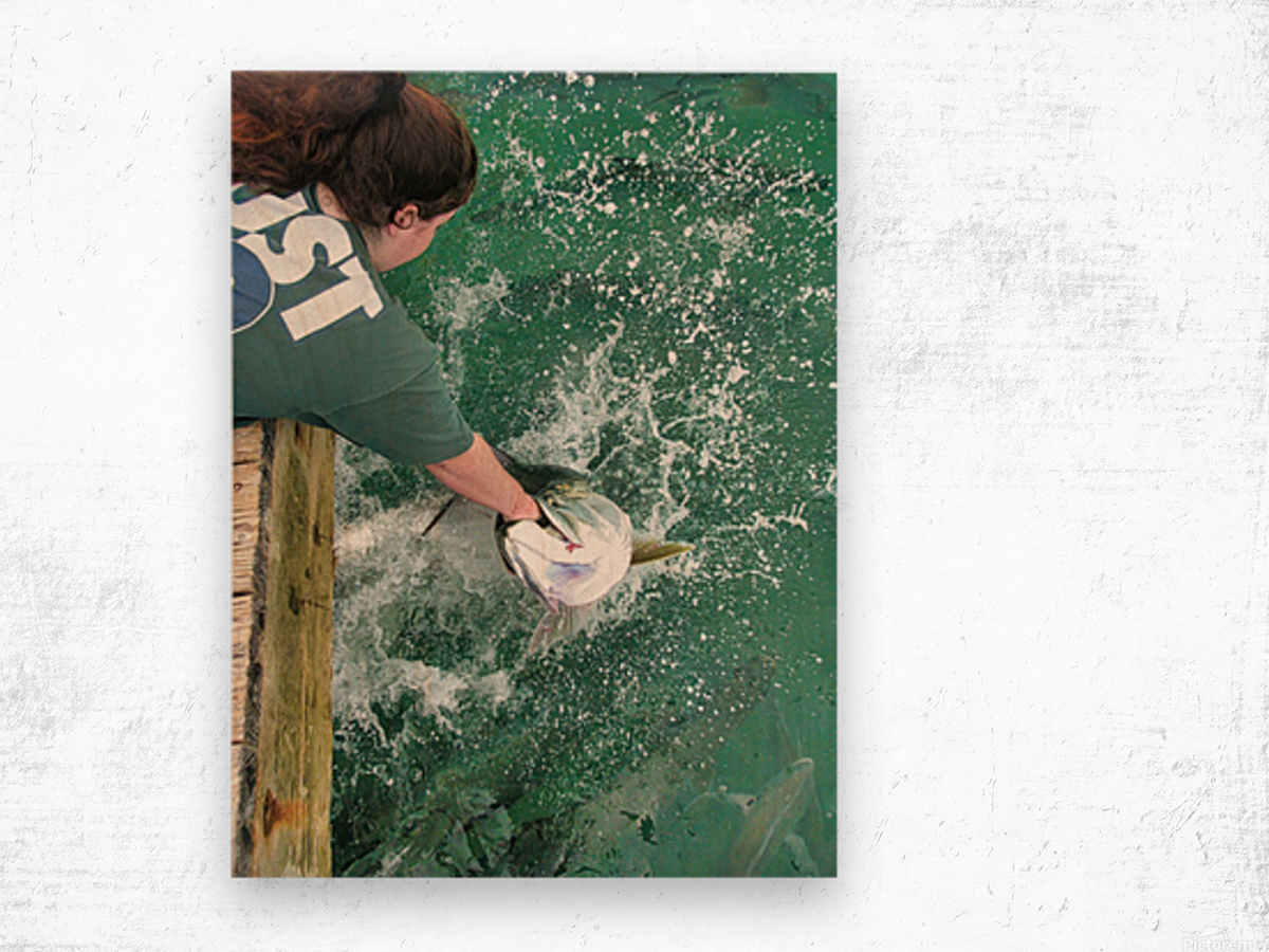 Tarpon Feeding Wood print