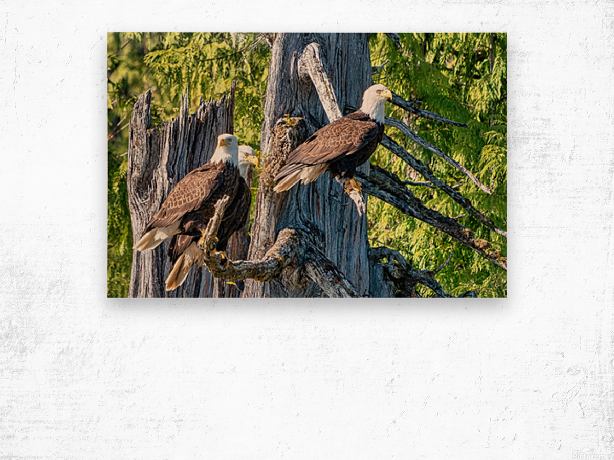 Eagle Tree Wood print