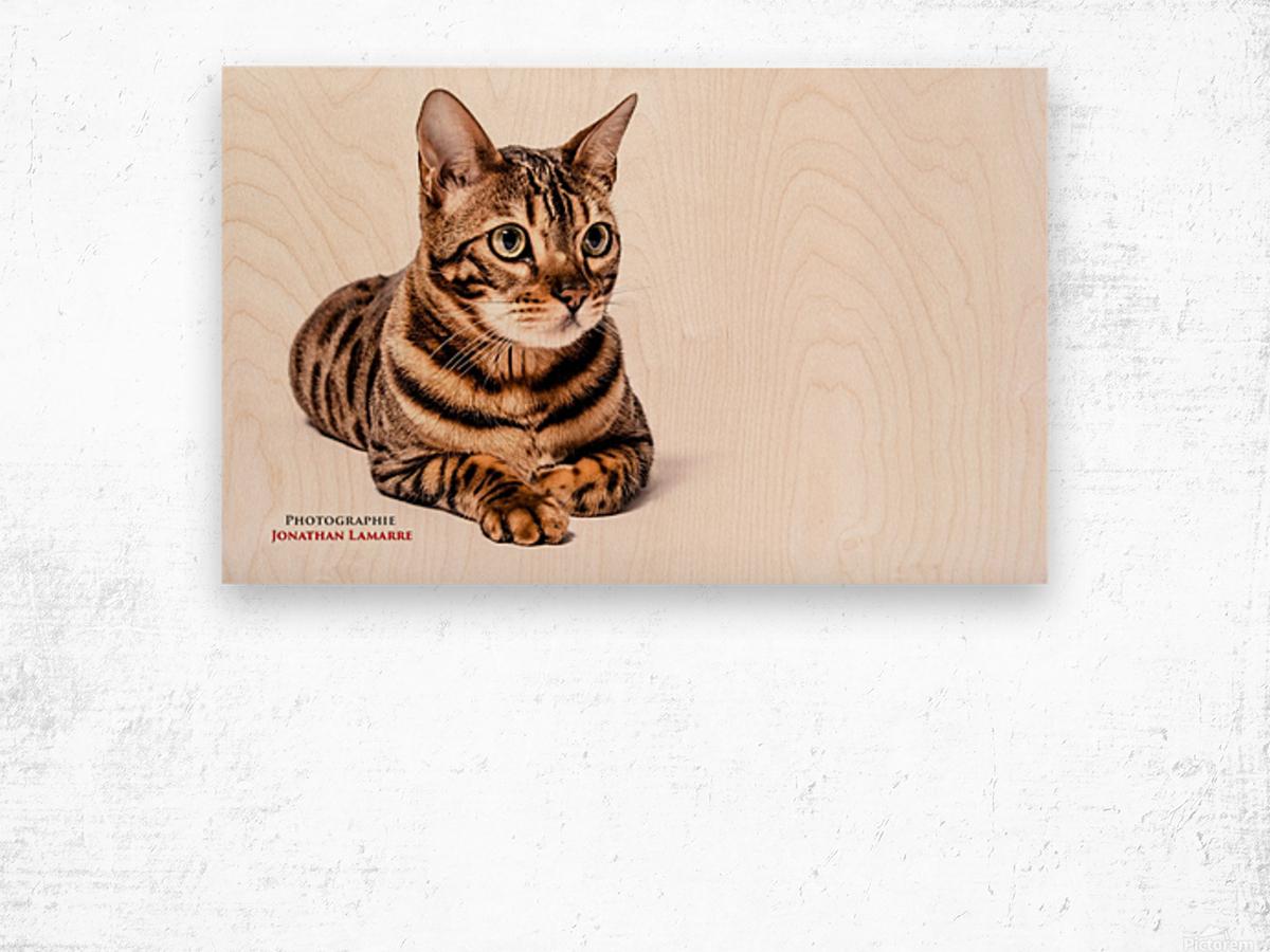 Cat life Wood print