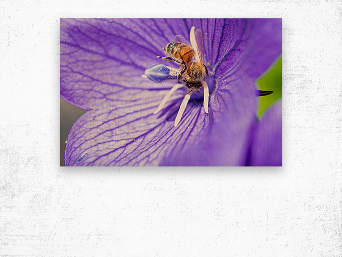Pollinating Bee Wood print